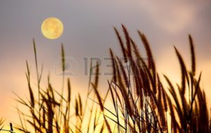 12391235-picture-of-grass-and-moon-on-the-sky-silhouette